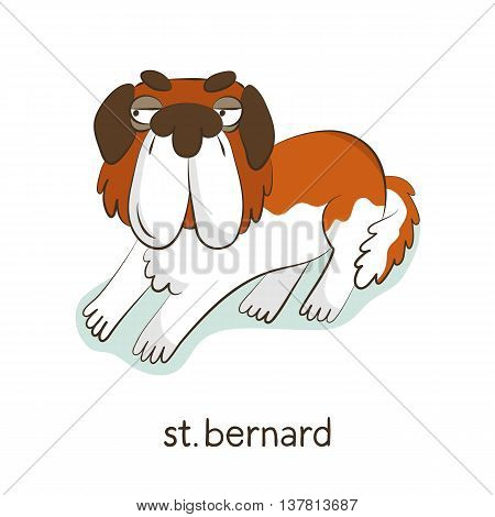 St. Bernard. Dog Character Isolated On White