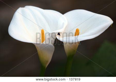 Flower Couple