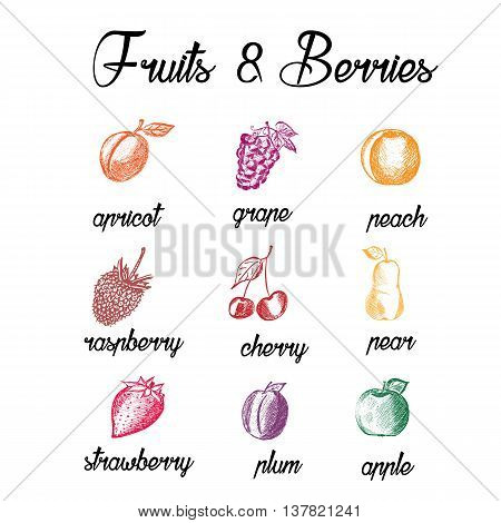 Fruits and berries. Eco food. Hand drawn apricot grape reach raspberry cherry pear strawberry plum apple. Sketch style fruits on white background. Vector illustration