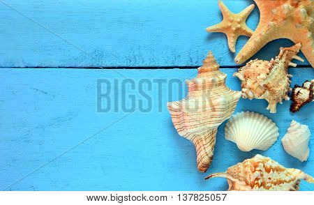 Seashells and starfish on blue wooden background