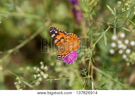 Spotted butterfly sit on a branch of thorns