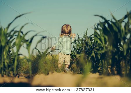 Small Boy In Green Field Of Corn Or Maize