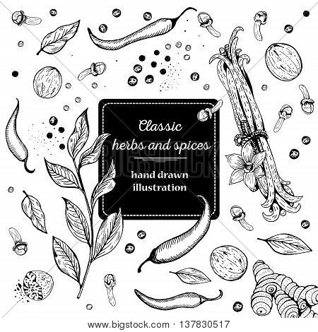 Vintage template. Ink hand drawn design with spice and herbs. Vector background with hand drawn herbs and spices