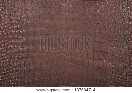 The color brown crocodile leather texture background