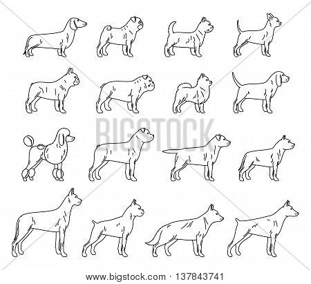 Vector dog thin line icons collection isolated on white for dog club or shop grooming training food or veterinary clinic.