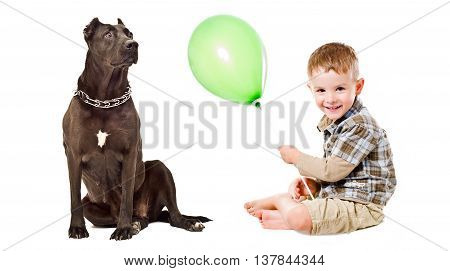 Child and Staffordshire terrier playing balloon isolated on white background