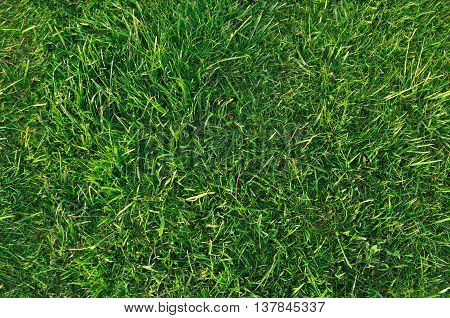 Green grass nature background, natural texture of plant in close-up