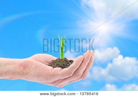 Hand Holding A Snowdrop Sprout Against Blue Sky