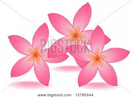Vector illustration of three rose flowers