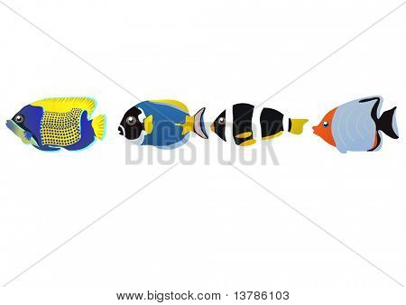 Vector illustration of row of tropical fishes isolated over white