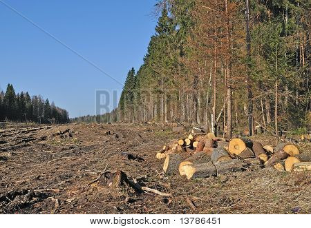 Deforested Area With Chock's Piles