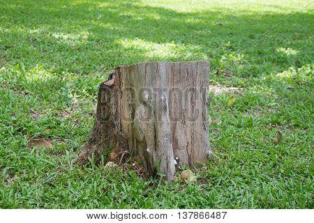 An old short stump on green grass