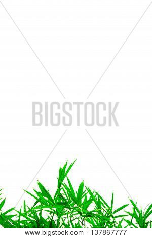 Green Leaves Isolated On White Background And Free Copy Space