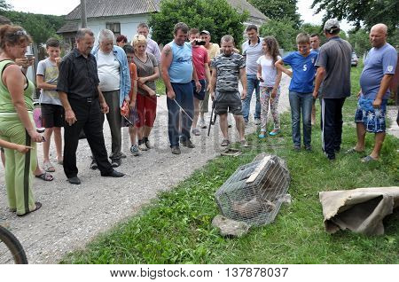 Shmankivchyky - Ukraine - 29 June 2016. The villagers caught an unknown animal which is popularly called Chupacabra. This beast killed many rabbits and poultry