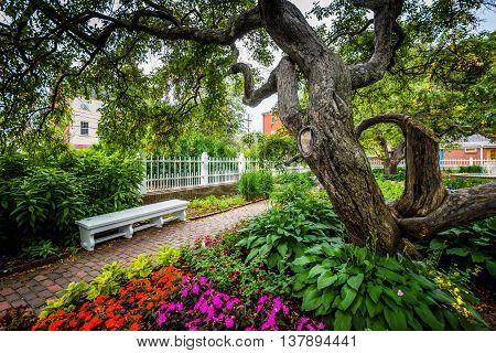 Gardens At Prescott Park, In Portsmouth, New Hampshire.