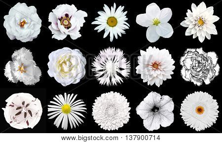Collage Of Natural And Surreal White Flowers 15 In 1: Peony, Dahlia, Primula, Aster, Daisy, Rose, Ge