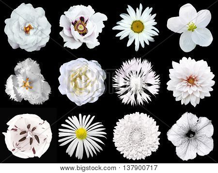 Collage Of Natural And Surreal White Flowers 12 In 1: Peony, Dahlia, Primula, Aster, Daisy, Rose, Ge