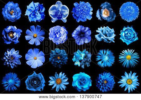 Collage Of Natural And Surreal Blue Flowers 24 In 1: Peony, Dahlia, Primula, Aster, Daisy, Rose, Ger