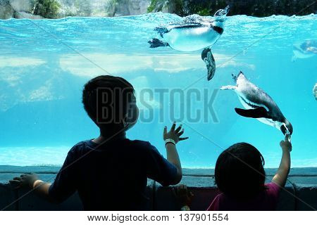 Silhouette of two children enjoying watching penguin in an Aquarium
