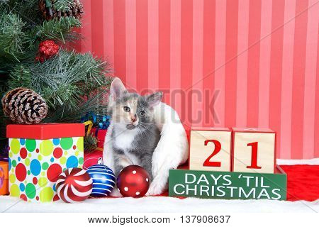 Calico kitten coming out of a stocking next to a christmas tree with colorful presents and holiday balls of ornaments next to Days until Christmas light beech wood blocks 21 days til Christmas
