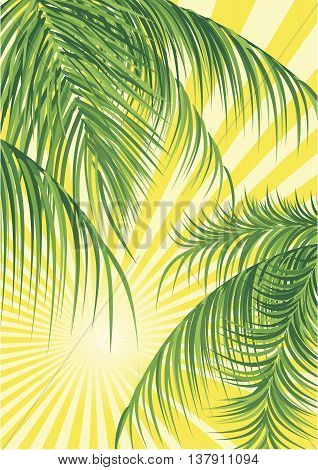 Vector Tropical Summer Holiday Poster Background, sunburst and palm leaves