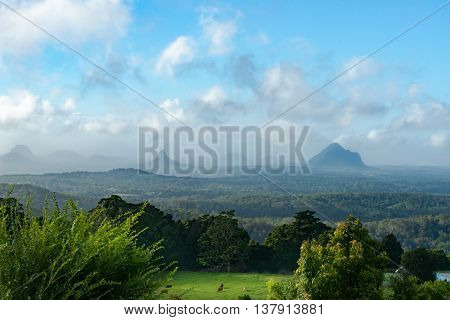 Australian scenery Queensland Glass House Mountains in haze beyond deep green bush and rainforest and cattle in foreground field catching a spot of sun through overcast sky.