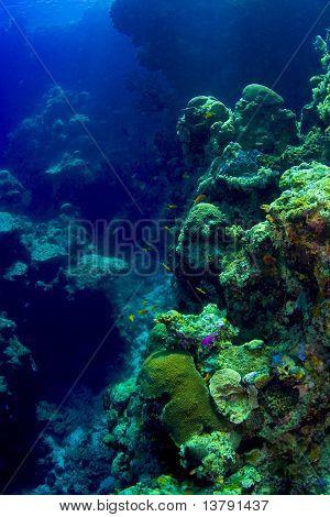 Estructura compleja de una pared de arrecife de Coral