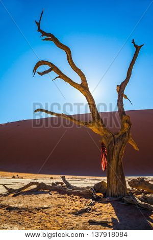 Picturesque dry trees at the bottom of dried lake. Dry picturesque tree decorated with silk scarf. Travel to Namibia. Park Namib-Naukluft National Park