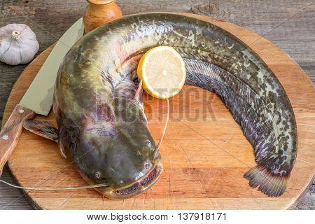 Raw european catfish prepare in the kitchen