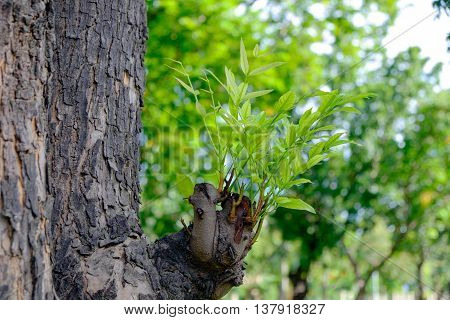 sprouting tree is growing from old tree