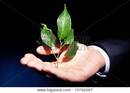 Conceptual image of human palm holding branch with fresh green leaves on black background