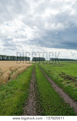 Agriculture field wheat road sowing sky landscape