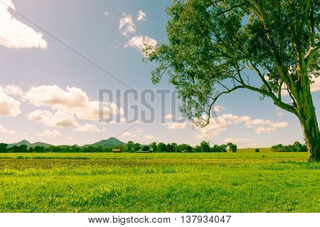 Old style faded color split tone image Australian landscape eucalyptus tree green pasture and crops to small she and distant hills.