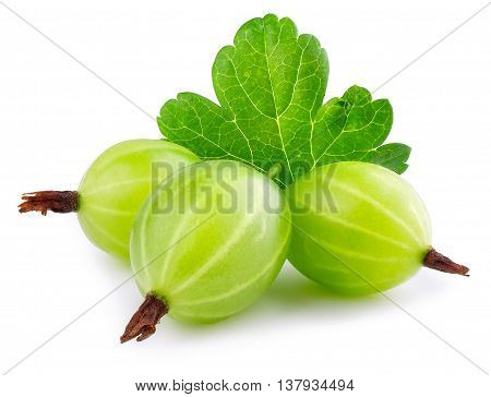 Gooseberry isolated on white background. Heap of green ripe gooseberry with leaf isolated on white background. Gooseberry closeup