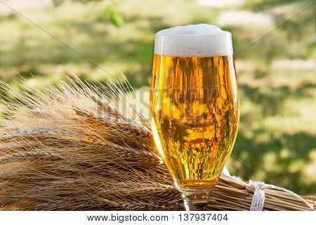 beer glass and raw material for beer production in the nature