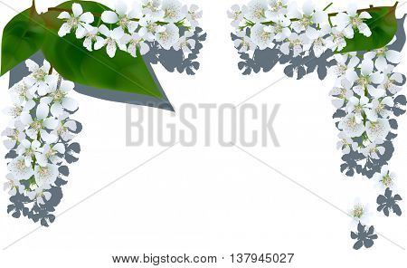 illustration with green foliage and light flowers frame