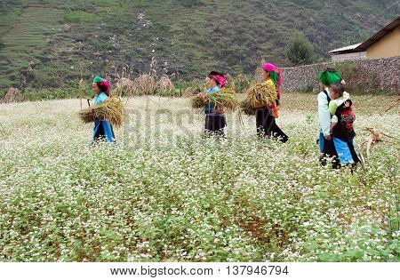 HA GIANG, VIETNAM, February 8, 2016 Hmong women's group, Ha Giang mountainous area, passing through Mach triangular flower field