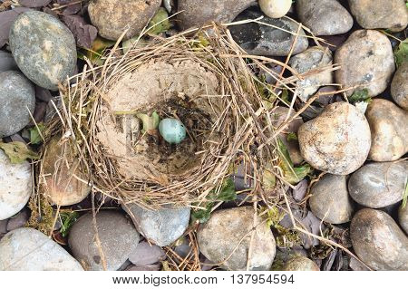 Old nest with one egg surrounded by stones