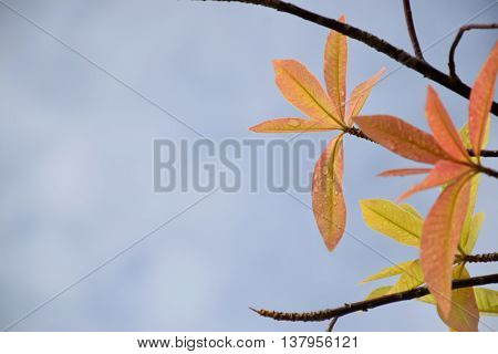 Beautiful top of new born leaves with blue sky for background