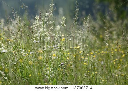 Summer grasses with shallow depth of field