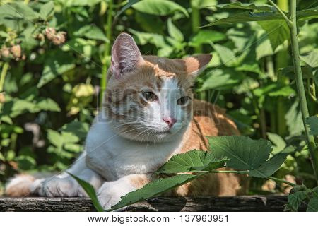 The red cat lies among green vegetation