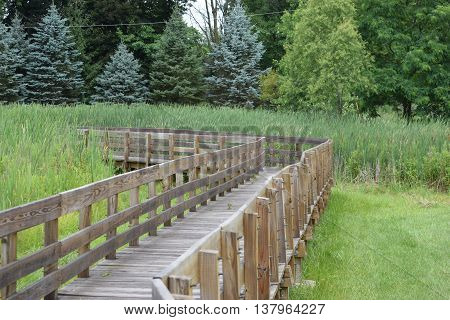 a curved elevated wooden walkway thru a wetland.