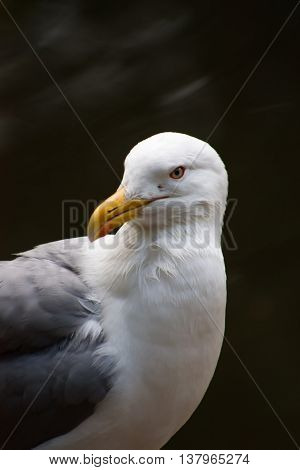 Seagull near a lake in a city zoo.