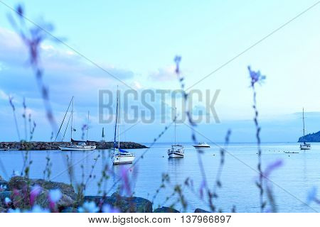 Purple flowers and view to the sea with anchored boats.