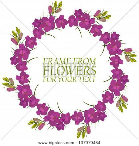 Frame of flowers for text. Crimson flowers Delphinium. Isolated on white background.