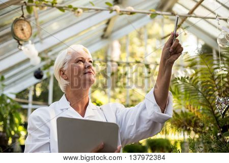 Low angle view of female scientist examining creeper plant at greenhouse