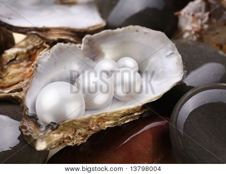 Image placer pearls in a shell on the wet pebbles.