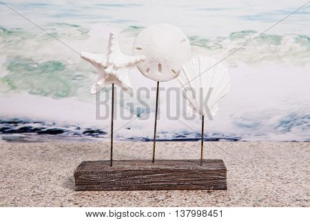 Shells, Starfish, & Sand Dollars