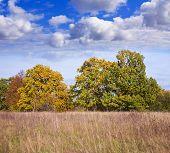 Постер, плакат: Сентября пейзаж с деревьями