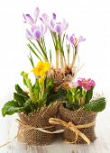 image of flower pots  - Colorful spring flowers in pots - JPG